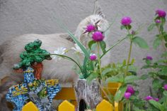 Nala cheirando as flores