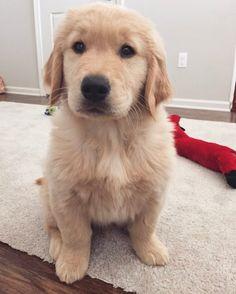 Cute puppy http://snapmilfs.com/?id=amatuer_milf_webcam