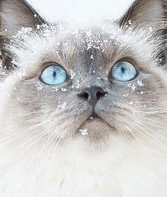 Att komma hem igen och borra näsan i den här killens mjuka päls, det där är lyckan!💙  #katt #cat #catlove #catstagram