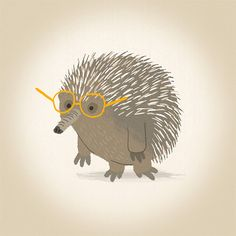 Echidna by Jared Chapman