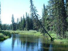 Used to camp along the Swan River in Condon, Montana...ALWAYS with a large caliber handgun ;)