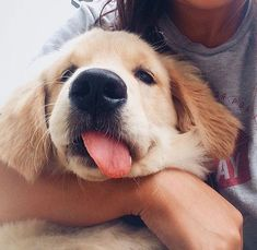 Golden Retriever puppy! Enjoy RUSHWORLD boards, AWE FACTOR MORE CUTE THAN YOU CAN HANDLE, BARK RUFFINGTON'S DOG KINGDOM and UNPREDICTABLE WOMEN HAUTE COUTURE. Follow RUSHWORLD! We're on the hunt for everything you'll love! #BarkRuffingtonsDogKingdom #AweFactorMoreCuteThanYouCanHandle #Puppies #goldenretrieverpuppy