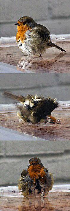 Les oiseaux à l'heure de la baignade