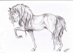 Currently, i recommend Cool Easy Horse Drawings For you, This Content is Similar With Clydesdale Horse Coloring Pages. You can use This picture for backgrounds on mobile with high quality resolution. Easy Horse Drawing, Horse Drawings, Animal Drawings, Pencil Drawings, Art Drawings, Animal Sketches, Drawing Sketches, Sketching, Arte Equina