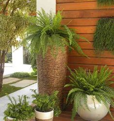 1 million+ Stunning Free Images to Use Anywhere Outdoor Planters, Outdoor Landscaping, Garden Planters, House Plants Decor, Plant Decor, Container Plants, Container Gardening, Minimalist Garden, Interior Plants