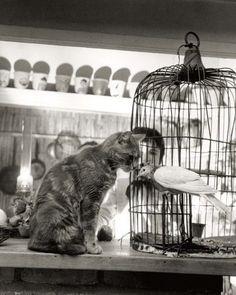 Робер Дуано Robert Doisneau – 72 фотографии | ВКонтакте More
