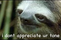 This sloth doesn't appreciate your tone.