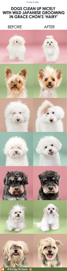 A fun photo series by pet photographer Grace Chon. Learn more at http://www.ifitshipitshere.com/grace-chon-dogs-before-and-after/