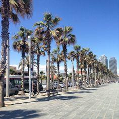 Passeig Marítim de Barcelona (Spain)