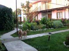 Экологичный Недорогой отдых в Крыму на Тарханкуте  в Окуневке: для молодежи,семьи с детьми. – частный пансионат «Окуневка Тур»