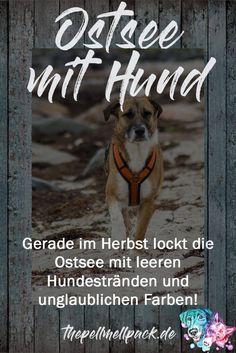 Ostsee mit Hund -- #hundestrand | #ausflug mit hund | #unterwegs mit hund | #urlaub mit hund | #ostsee | #strand | thepellmellpack.de