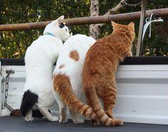 ネコの井戸端会議 amnemonic: 68131.jpg トラックの荷台は楽しいもんね。 いい写真だなー。
