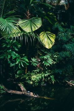 A tropical jungle >>