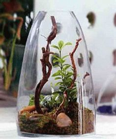 A glass terrarium with plants, small rocks and moss, used for eco style table decoration, are one of modern interior trends.