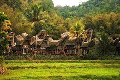 Toraja village - near Rantepao - Sulawesi - Indonesia