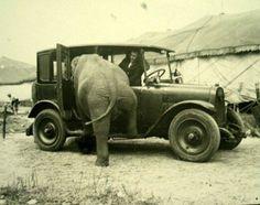 La voiture à l'éléphant ...