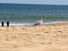 Oak Avenue - Rehoboth Beach