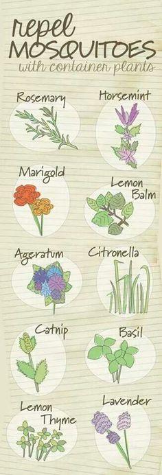 22 best Jardin cahiers, logiciels images on Pinterest Vegetable