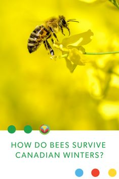 """One of the many questions I get about keeping honeybees in Saskatchewan is """"How do they survive the winter?"""" Well, for winter, I wrap them up snug as a bug in a rug."""