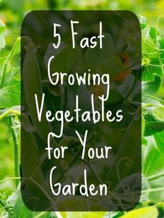 5 Fast Growing Vegetables for Your Garden