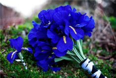 Bright blue bouquet - something you don't see everyday! From The Crimson Poppy