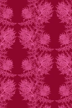 Timorous Beasties Wallcoverings - Thistle