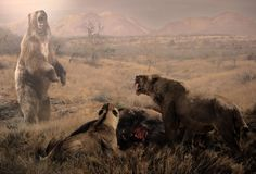 """""""Formidable obstacle""""  An Arctotherium bonariense - the giant short-faced bear of the Lujanian in South America is interested in the dinner of a couple of Similodon populator, but the two of them seem as quite a formidable obstacle to the bear acting further and the interaction is restricted to distant exchange of unfriendly manifestations."""