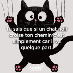 Stop aux superstitions et CHAT ( noir ) ira mieux ! Mantra, Love Quotes, Funny Quotes, Albert Schweitzer, Motivational Messages, French Quotes, Positive Words, Miraculous Ladybug, I Love Cats