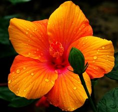 Beautiful-Pictures-Of-Flowers