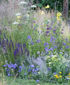 Wild Flower Border - a natural looking border for sun or partial shade.    Composition and key for planting plan for 3m x 1.5m ;  1.	Salvia nemorosa 'Ostfriesland' (5 plants)  2.	Deschampsia cespitosa (5 plants)  3.	Penstemon 'Midnight' (4 plants)  4.	Campanula carpatica (4 plants)  5.	Agastache 'Blue Fortune' (4 plants)  6.	Coreopsis verticillata 'Moonbeam' (2 plants)  7.	Calamintha nepeta ssp. nepeta (7 plants)  8.	Campanula lactiflora 'Prichard's Variety' (4 plants)