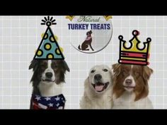 Healthy Dog Treats Made In The USA - Bark at the Moon Natural Turkey Dog Treats!  100% Human-Grade American Sourced Ingredients - Grain Free- No Additives or Fillers!  Great for Sensitive Tummies and Low fat, Low calorie Diets - FREE Shipping With Amazon Prime!