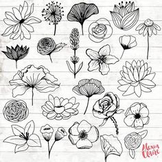 Flowers Clipart 23 Hand Drawn Floral Cliparts Realistic Floral Logo Art Flower Logo Elements Flower vector is part of Flower sketches extendedlicense For any other extended commercial - Logo Floral, Flower Logo, Flower Sketches, Art Sketches, Drawing Flowers, Tattoo Flowers, Floral Drawing, Hand Drawn Flowers, Simple Flower Drawing