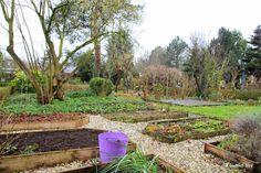 Madelief: My garden