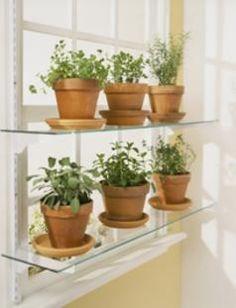 Ideas For Kitchen Window Plants Growing Herbs