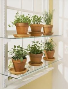 1000 Images About Window Plants On Pinterest Glass