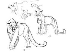 Cougar Illustration Concepts_1 by davidsdoodles on deviantART