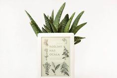 Rośliny nas ocalą - recenzja ebooka | Martyna Czernicki Pineapple, Fruit, Pine Apple