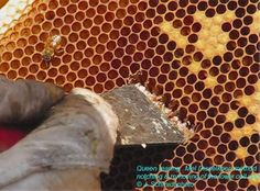 Good bee keeping articles