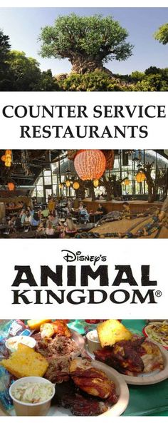 5 of the best Counter Service Restaurants in Animal Kingdom, Disney World, Orlando Florida.  Best use of Disney Dining Credits for Quick Service food.  Tips and Tricks, hints and hacks to get the best value.  Food pictures, reviews and recommendations.