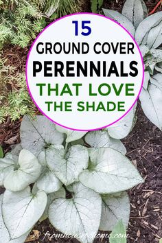 Great list of perennial ground cover plants that love the shade! There are so ma… Great list of perennial ground cover plants that love the shade! There are so many different options that are low maintenance and will help prevent weeds in my garden. Dwarf Plants, Tall Plants, Outdoor Plants, Flowering Plants, Flowering Ground Cover Perennials, Zone 6 Plants, Part Shade Perennials, Table Color, Ground Orchids