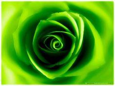 Green. Love it!