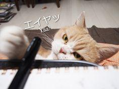 小雪が狙う黒いアレ The black thing that Koyuki stares at 「小雪の怒ってなどいない!!」