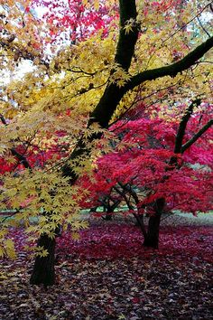 moondancehooper:   via Autumn on Pinterest / Autumn in England by frenchmonkeys on Flickr