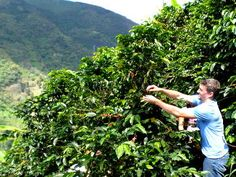 You can't leave Colombia without trying the famous farm fresh Colombian coffee…