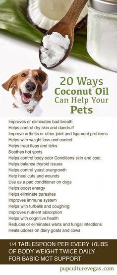 dog stuff,dog ideas,dog care,dog tips,dog grooming #doggrooming