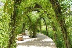 leafed out living willow arches