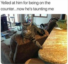 Animal Memes that will Make Your Day! 20 Funny Animal Memes that will Make Your Day! - Lovely Animals Funny Animal Memes that will Make Your Day! - Lovely Animals World Funny Animal Memes, Cute Funny Animals, Funny Animal Pictures, Funny Cute, Cute Cats, Funny Memes, Funny Videos, Funny Photos, Meme Meme