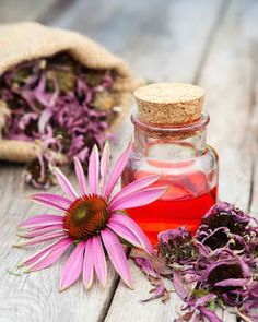 ECHINACEA  is often used to treat wounds and bacterial infections. http://www.hungryforchange.tv/article/5-natural-antibiotics-that-fight-illness-promote-health