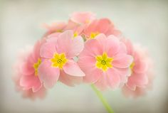 In the pink | Mandy Disher | Flickr