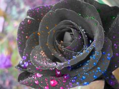 Rainbow Rose by MeganMarie1.deviantart.com on @deviantART
